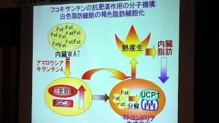 「フコキサンチンの抗肥満活性」 北海道大学大学院水産化学研究院 教授 宮下和夫氏