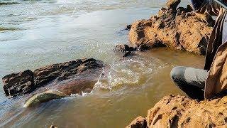 Cá lại ăn sung - Pha cá kéo làm rụng tim bao cần thủ ✅