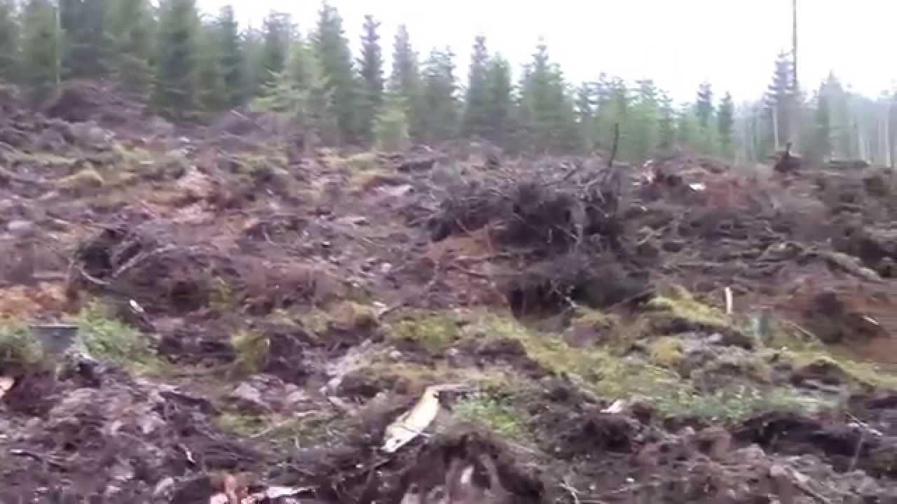 Metsän Laikutus