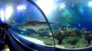 Панорамное видео. Путешествие. Aquarium Kuala Lumpur. 360 Video. Аквариум Куала Лумпура.
