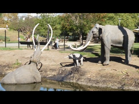 Mamut en Los Angeles, La Brea Tar Pits, Primera Parte