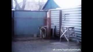Приколы про животных танцующие собаки смешные животные