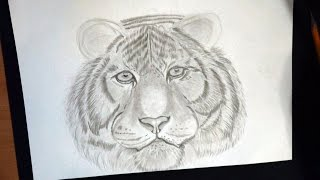 Как нарисовать морду тигра.  How to draw a tiger face. // Рисунки карандашом #17(Всем привет.Меня зовут Алёна, я рисую для души. Сегодня рисую тигра карандашом на альбомном листе. Покажу..., 2016-10-17T10:40:35.000Z)