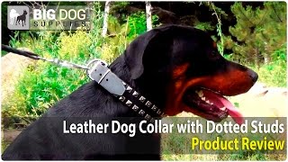 Rottweiler And Other Large Dogs Wearing Brass Studded Dog Collar