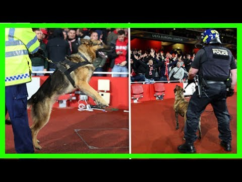 Arsenal cologne emirates match delayed –latest pics as police dogs deployed inside ground