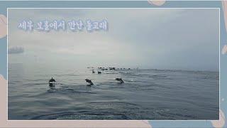 필리핀 세부 보홀섬에서 만난 돌고래 떼