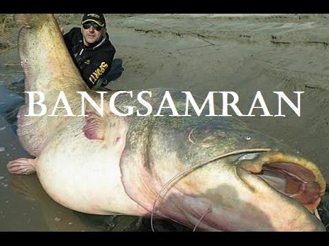 Fishing In Bangkok Thailand - Bungsamran - Giant Mekong Catfish
