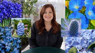 Blue Flowers for Beautiful Garden