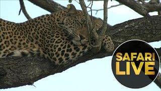 safariLIVES: Episode 12 thumbnail