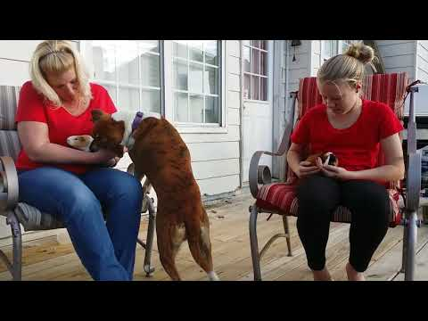 Guinea Pigs with Jenn and Madi 2018 Feb 24