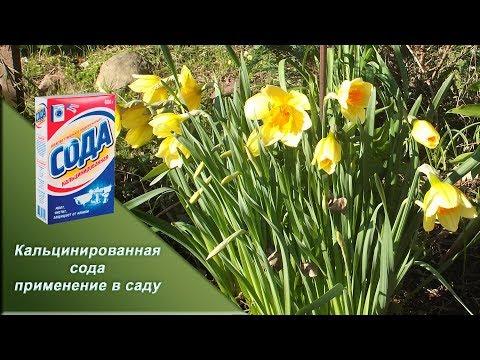 Кальцинированная СОДА  применение в саду