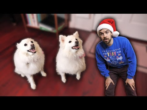 Telling our dogs they're adopted (Emotional) (YIAY #491)