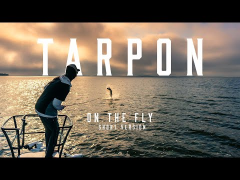 Fly Fishing For Spring Time Tarpon, Florida Back Country