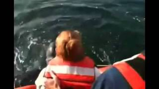 Endangered Leatherback Sea Turtle Tangled in Buoy Line Rescued By Coast Guard