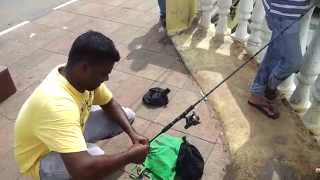 FISHING IN GOA PATTO BRIDGE PANJIM.(, 2013-06-24T18:46:49.000Z)