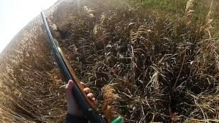 Один день охоты с Курцхааром на куропатку