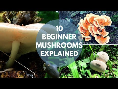 Mushroom Foraging For Beginners