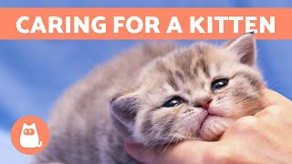 How to CARE for a KITTEN  Food, Education and Health