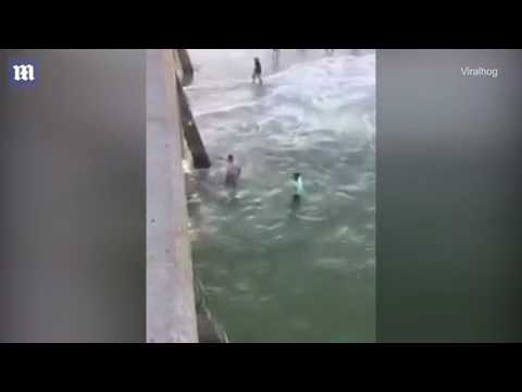 Man grabs a shark by the tail, immediately gets bitten