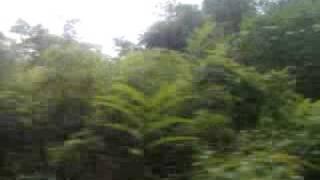 in the jungle train 13 malaysia