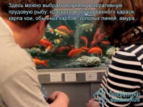 ЗНАКОМСТВО СО МНОЙ. О СЕБЕ!!! KNOW ABOUT ME!!! - YouTube