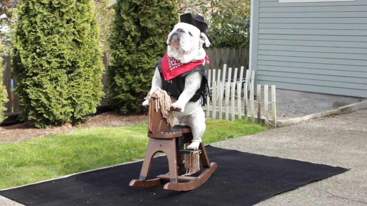 Bulldog On Rocking Horse Youtube