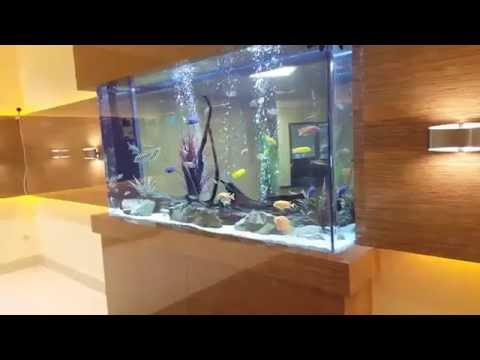 Custom freshwater Aquarium with freshwater fish setup ...