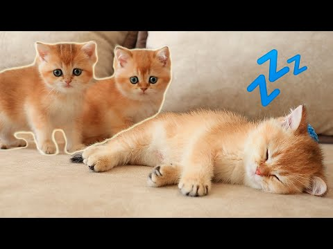 "Arnold's Brothers and Sisters DISTURB his sleep. ""Revenge"" Season 1 Episode 2 😂 Soo Funny kittens"
