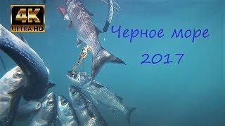 Подводная охота с Арбалетом  Черное море видео сезон 2017