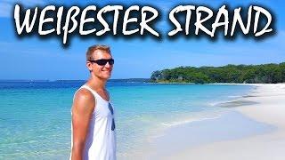 Der weißeste Strand Australiens - Hyams Beach + Kängurus | VLOG #78