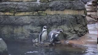 Penguins watch Seattle snow