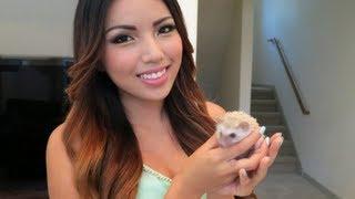 Meet my pet Hedgehog Poki !!!