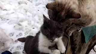 Брачные игры кошек , необычная  любовь