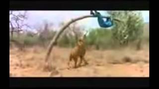 Videos do whatsapp-correndo do leao