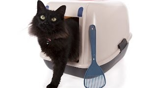 How to Litter Box Train Your Cat | Cat Care