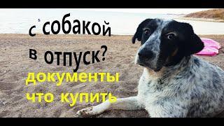 Вывозим собаку кошку за границу /С собакой в отпуск
