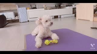 홈파티 | 강아지산책 | 집사하루일과 | 집사브이로그