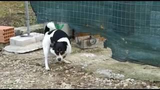 Dog & murgi sex(sknahare)
