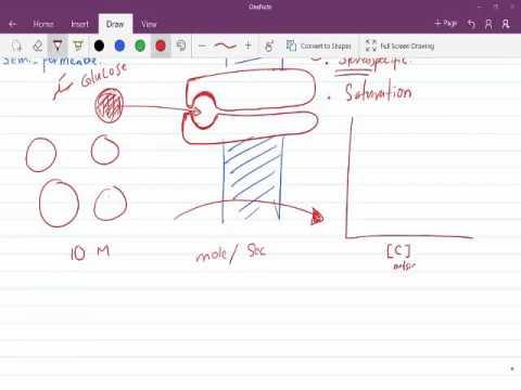 Facilitated Diffusion الانتشار الميسر