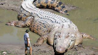 10 Biggest Crocodiles Ever Found