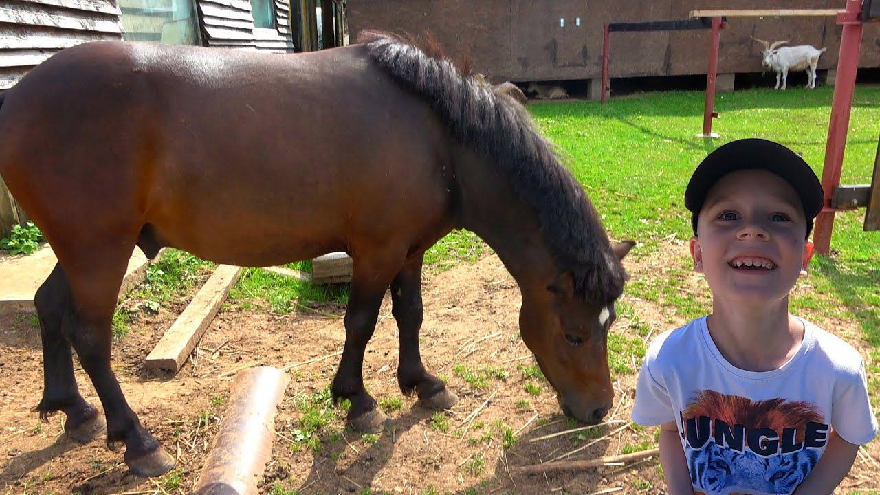 Видео про животных для малышей - Лошадки Пони Петух и много разных животных для детей