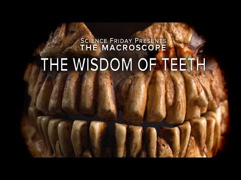 The Wisdom of Teeth