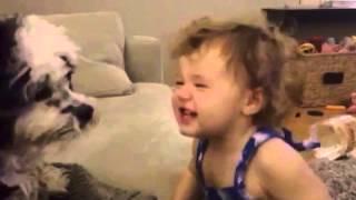Baby Gives Kisses To Shih Tzu Dog