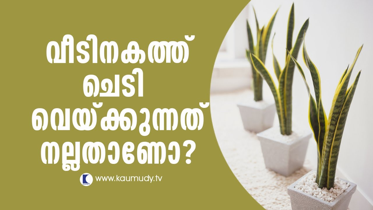 Is It Good To Grow Plants Inside House Feng Shui Las Hour