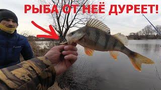 Эта БЛЕСНА сделала ему рыбалку Крупные ОКУНИ и ЩУКИ с каждой проводки