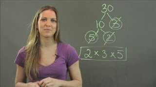What Is the Prime Factor of the Number 30? : Math Tutorials