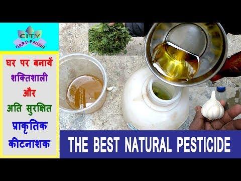 Make a powerful organic pesticide at home//घर पर बनायें एक शक्तिशाली जैविक कीटनाशक