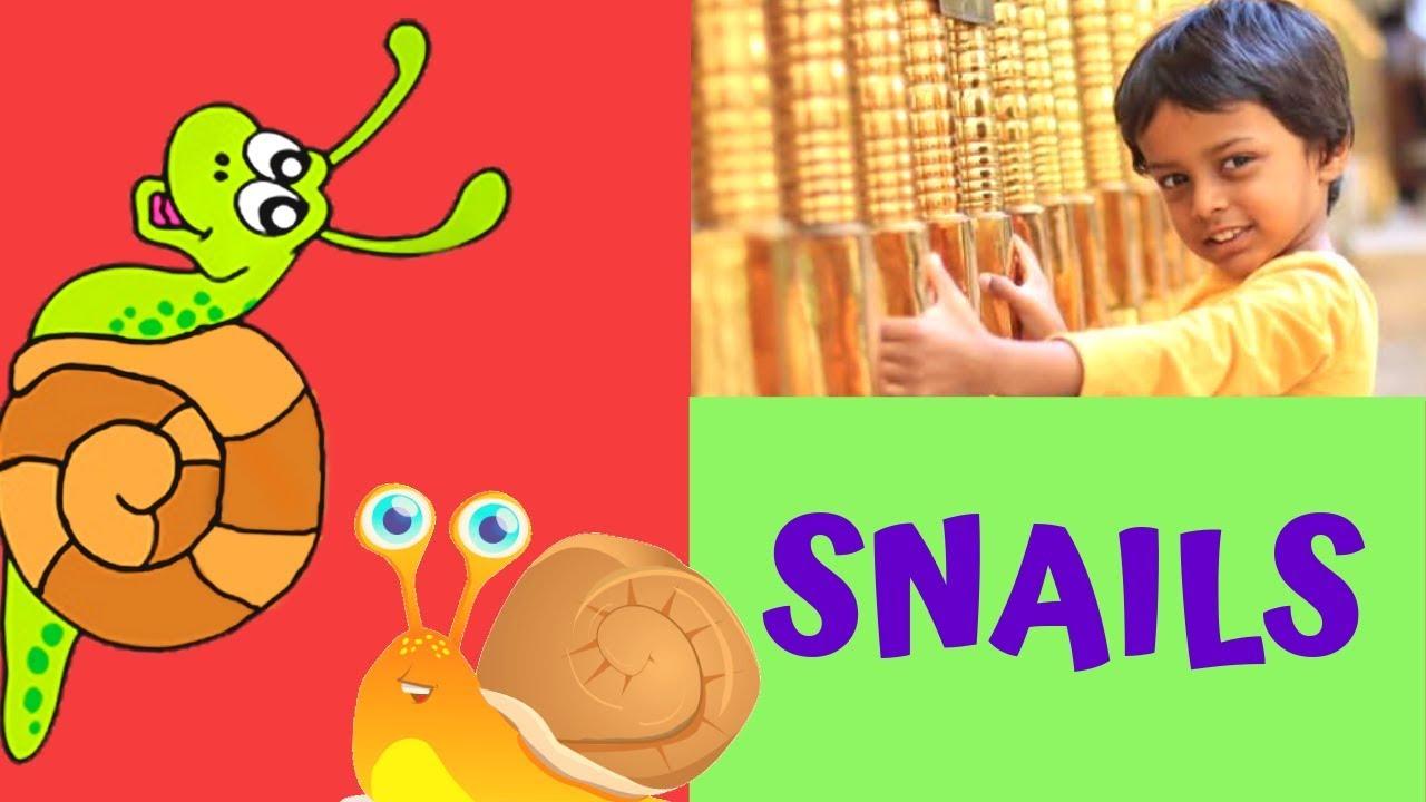 Garden snails - Fun facts for kids - YouTube
