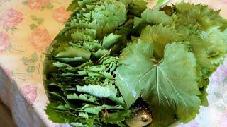 Заготавливаем листья винограда на зиму для Азербайджанской ДОЛМЫ / Yaprak Salamurasi tarifi
