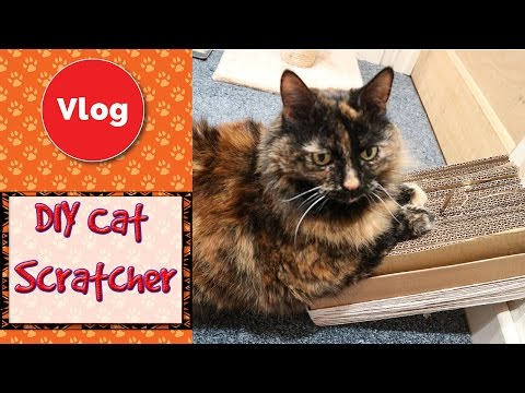 how to make a cat scratch box
